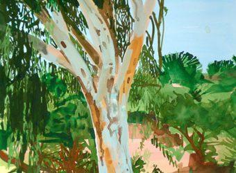 Crete 70014, Eucalyptus tree