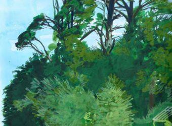 Monterey Pines in Helford